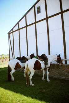 Route des vins Etats Unis (3)